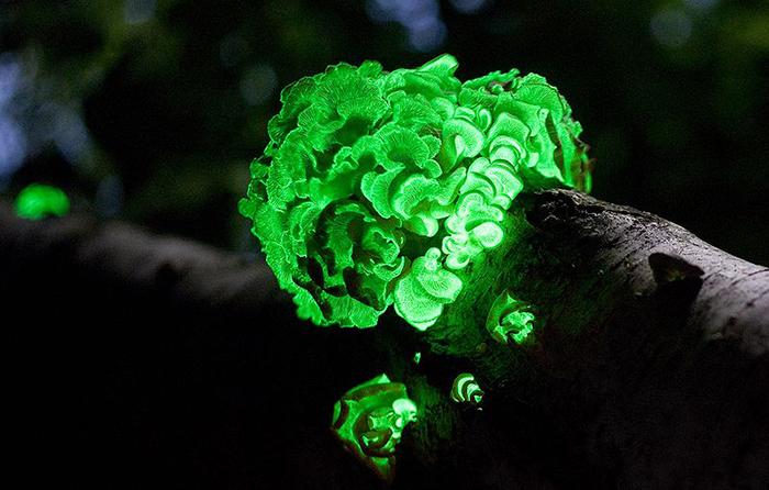 Perspektyviausi žalieji verslai: nuo šviečiančių bakterijų iki miesto medžio