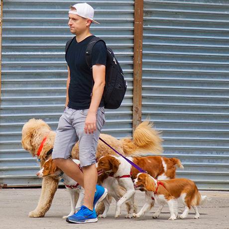 Šunų išvedžiotojai